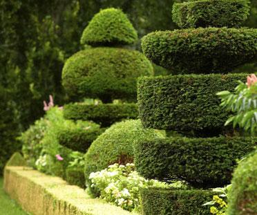landscape evergreen jardin
