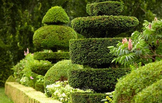 entretien paysager landscape evergreen
